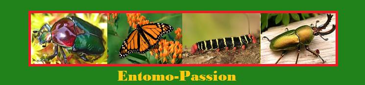 Entomo-Passion.