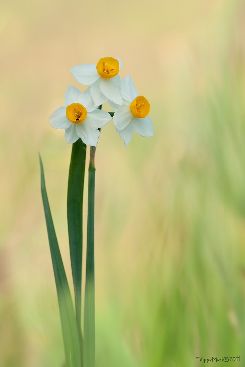 Sono un Narciso anch'io.. Narcis10