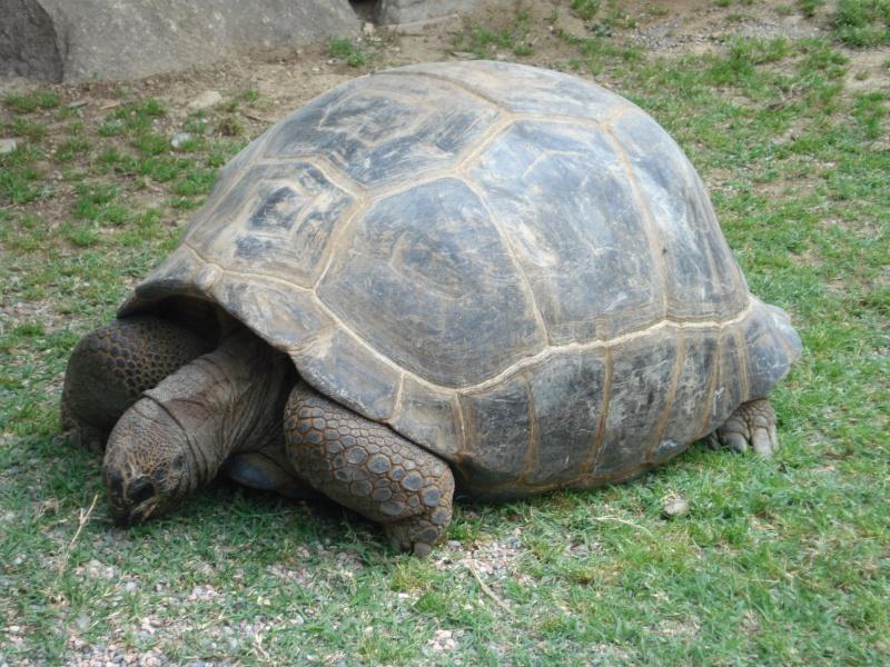 Guardate che bella tartaruga... Dsc00810