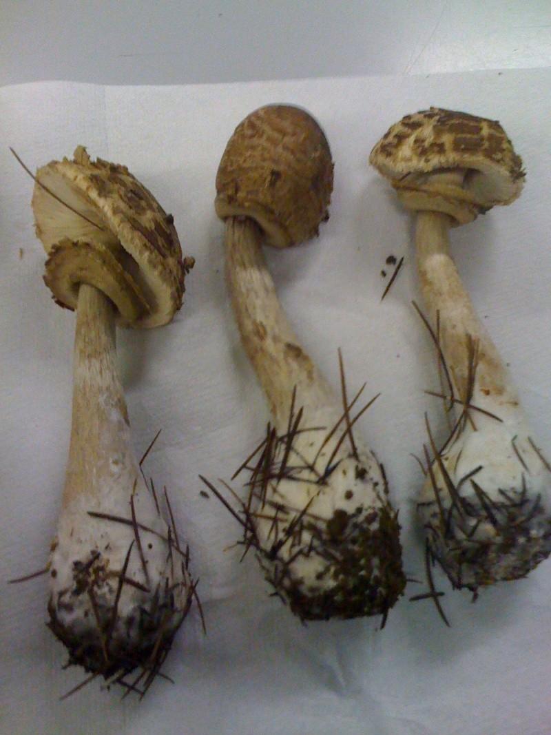 Che funghi sono? Img_0212