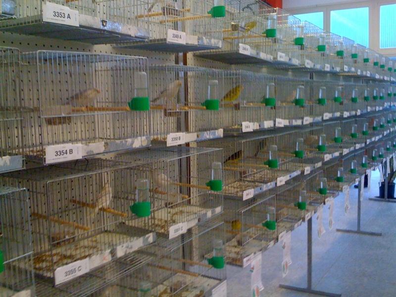 Alcune foto della mostra ornitologica di Chiuduno (BG) Img_0217