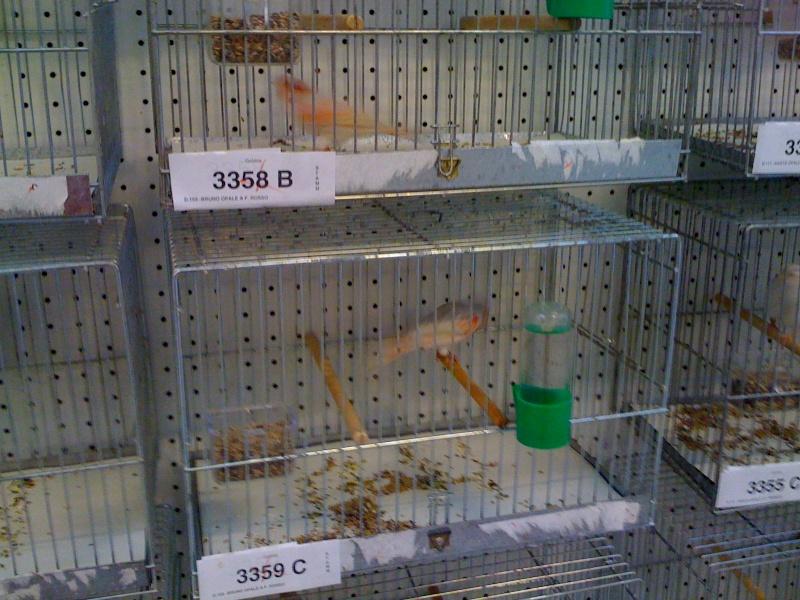Alcune foto della mostra ornitologica di Chiuduno (BG) Img_0218