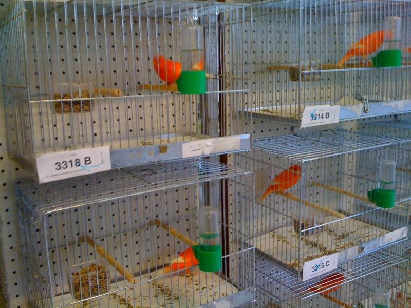Alcune foto della mostra ornitologica di Chiuduno (BG) Img_0219