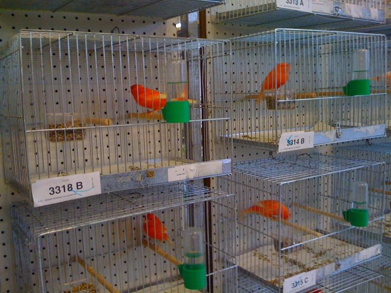 Alcune foto della mostra ornitologica di Chiuduno (BG) Img_0220