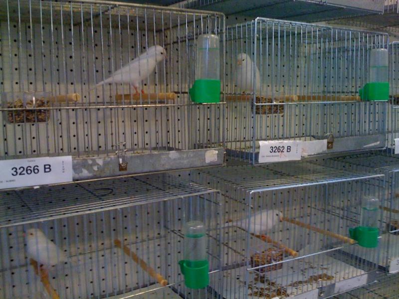 Alcune foto della mostra ornitologica di Chiuduno (BG) Img_0221