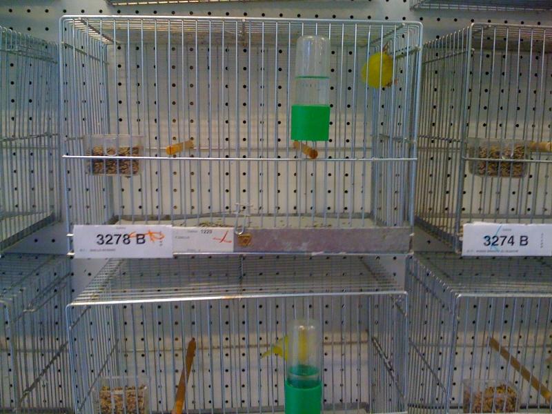 Alcune foto della mostra ornitologica di Chiuduno (BG) Img_0222