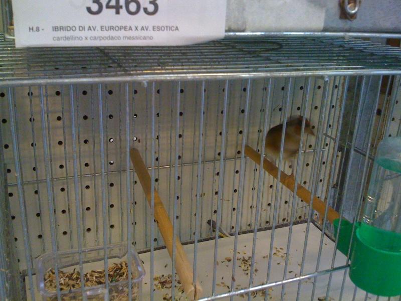 Alcune foto della mostra ornitologica di Chiuduno (BG) Img_0223