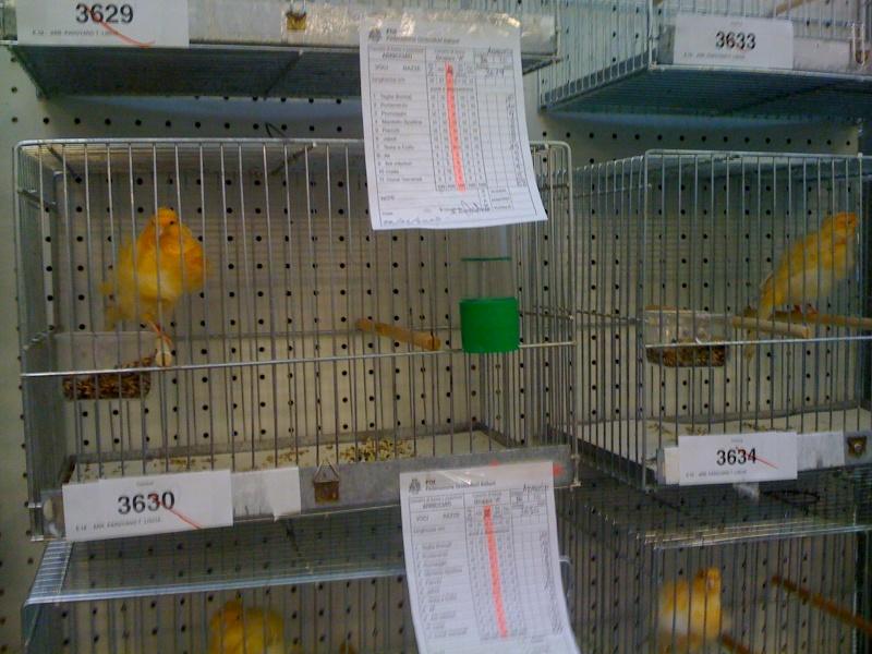 Alcune foto della mostra ornitologica di Chiuduno (BG) Img_0224