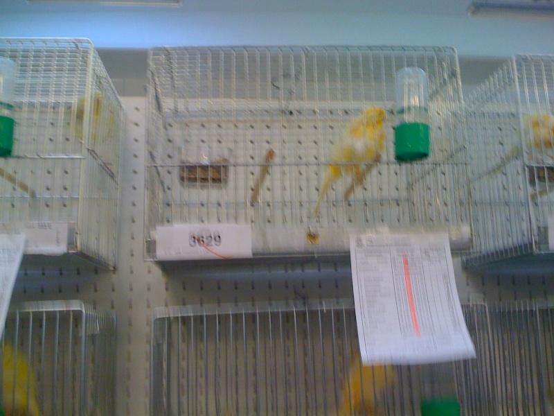 Alcune foto della mostra ornitologica di Chiuduno (BG) Img_0225
