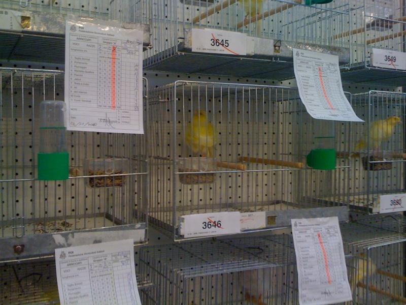 Alcune foto della mostra ornitologica di Chiuduno (BG) Img_0226