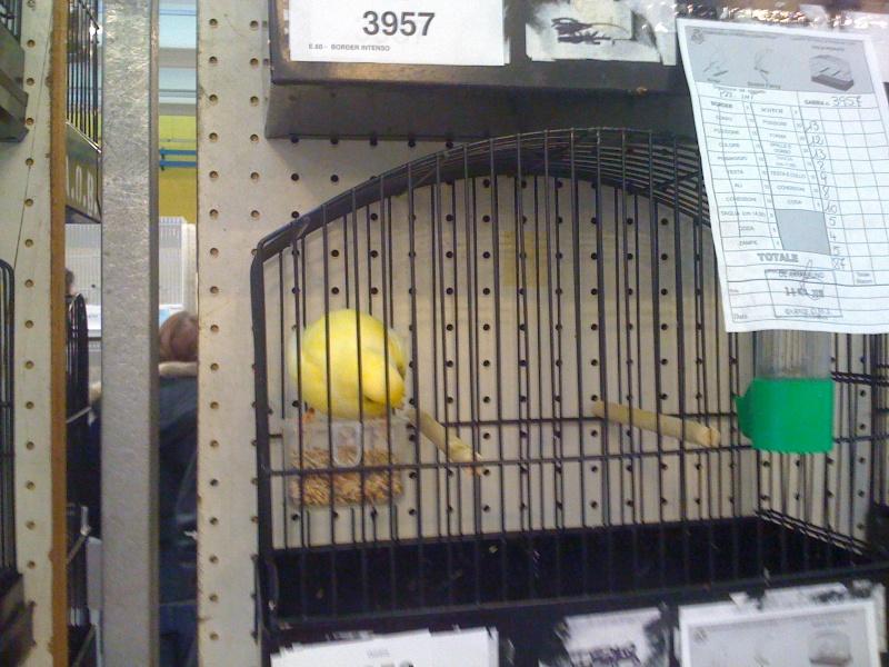 Alcune foto della mostra ornitologica di Chiuduno (BG) Img_0229