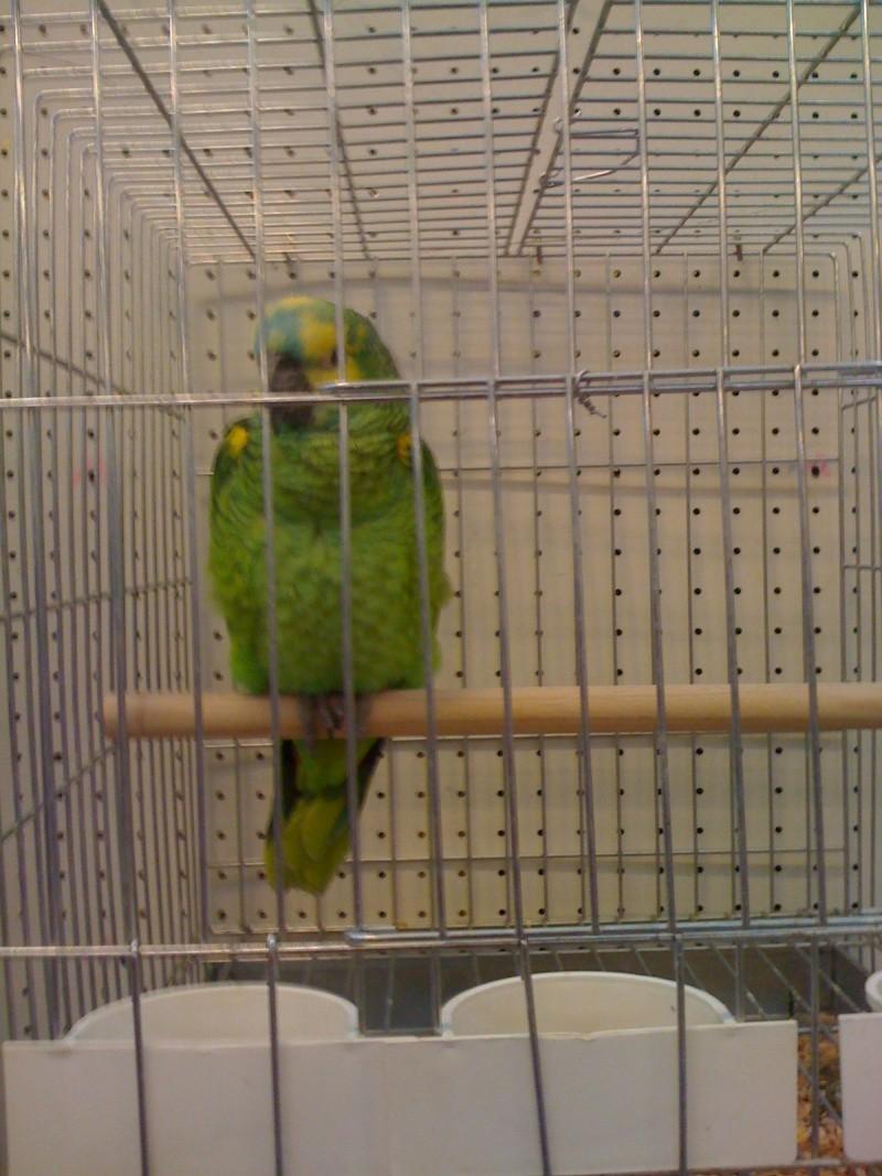 Alcune foto della mostra ornitologica di Chiuduno (BG) Img_0230