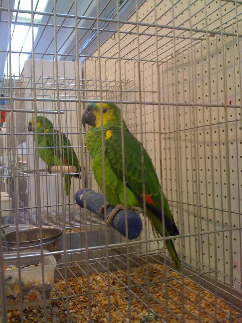 Alcune foto della mostra ornitologica di Chiuduno (BG) Img_0231