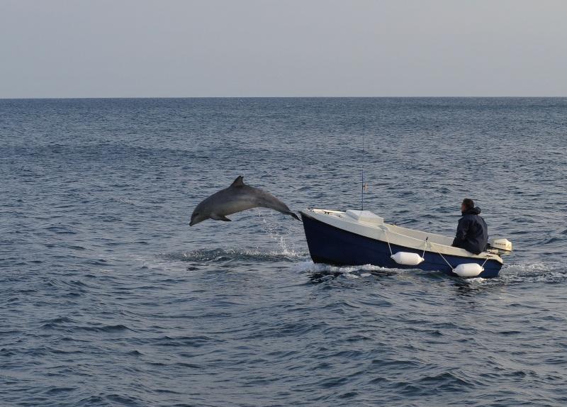 Un dauphin a Pors Poulhan Dsc_8211