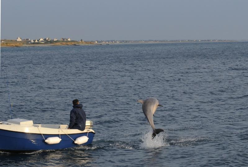 Un dauphin a Pors Poulhan Dsc_8212