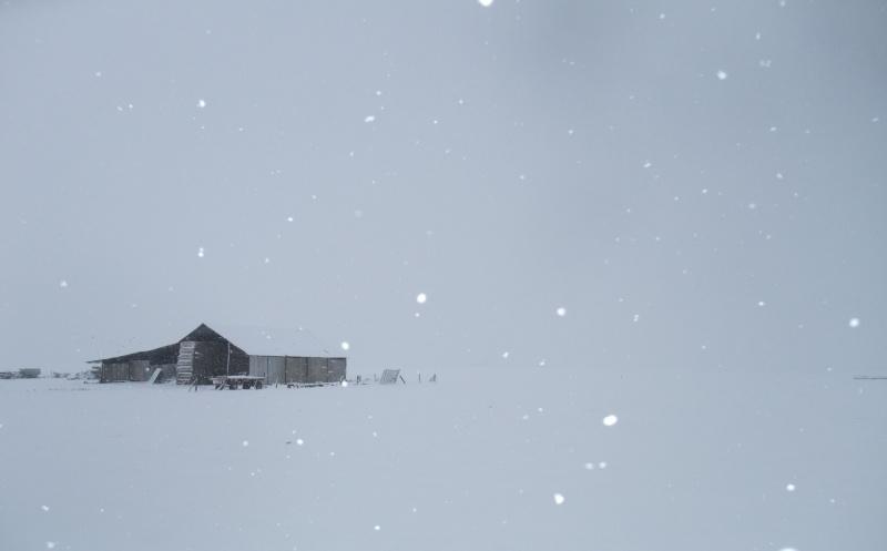 un de mes fils mon jardin sous la neige Dscf7115