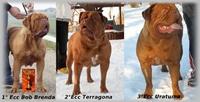 Dogue De Bordeaux ITALIAN FORUM - Portale Campio13