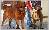 Dogue De Bordeaux ITALIAN FORUM - Portale Campio14