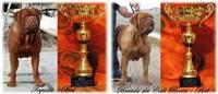 Dogue De Bordeaux ITALIAN FORUM - Portale Vincen12