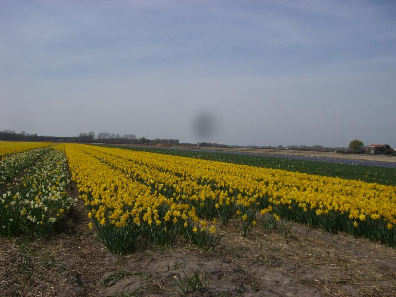 Les Pays-bas ou aussi appelés Hollande Cimg7812