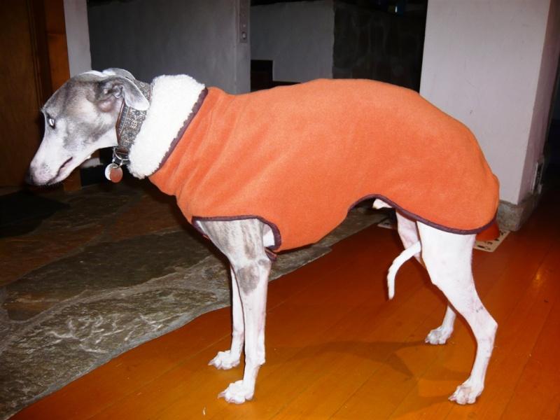 Aider les galgos en leur confectionnant des manteaux Zizou_10