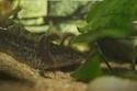Axolotl Spyro10
