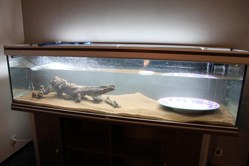 Lancement aquarium 600litres aquatlantis Img_9813