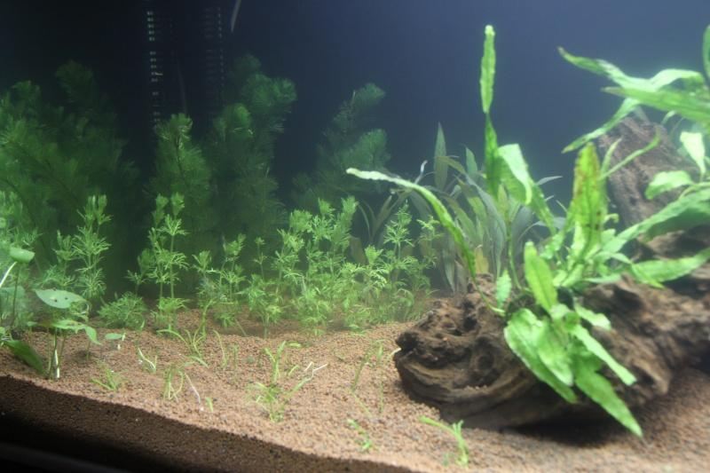 Lancement aquarium 600litres aquatlantis Img_9910