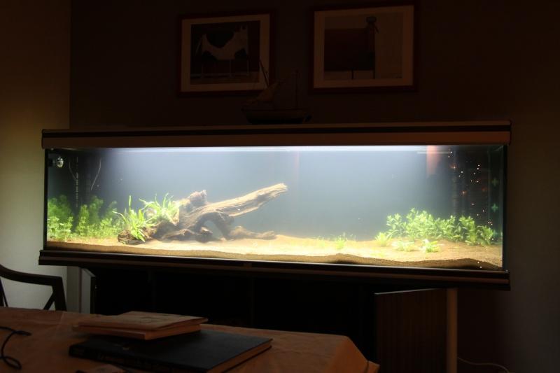 Lancement aquarium 600litres aquatlantis Img_9913