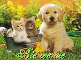 bonsoir a tous Images10