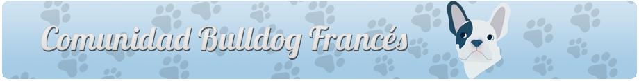 Comunidad Bulldog Francés - Portal Comuni16