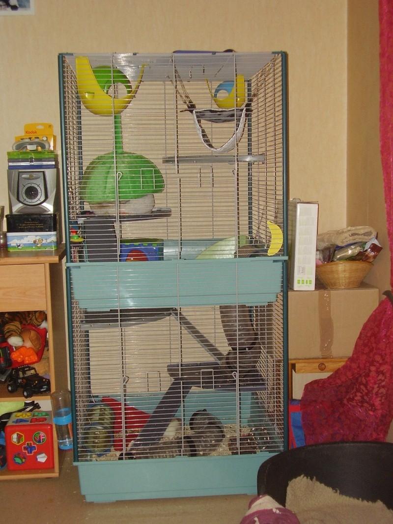 Photos de vos cages P2270011