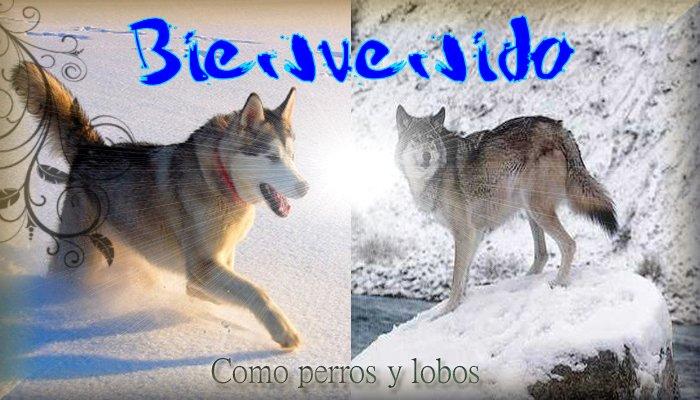Como perros y lobos aventureros