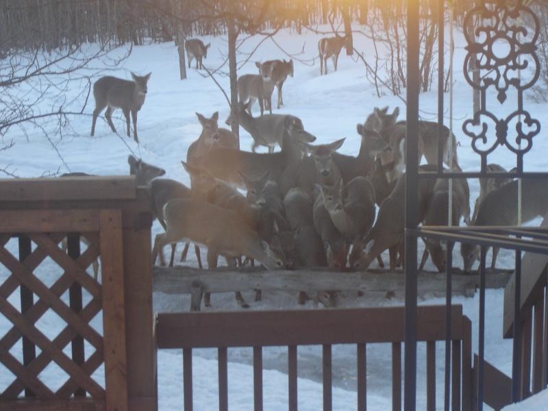 Voici ce que j'ai vu dans ma cour arrière ce matin... Dsc05910