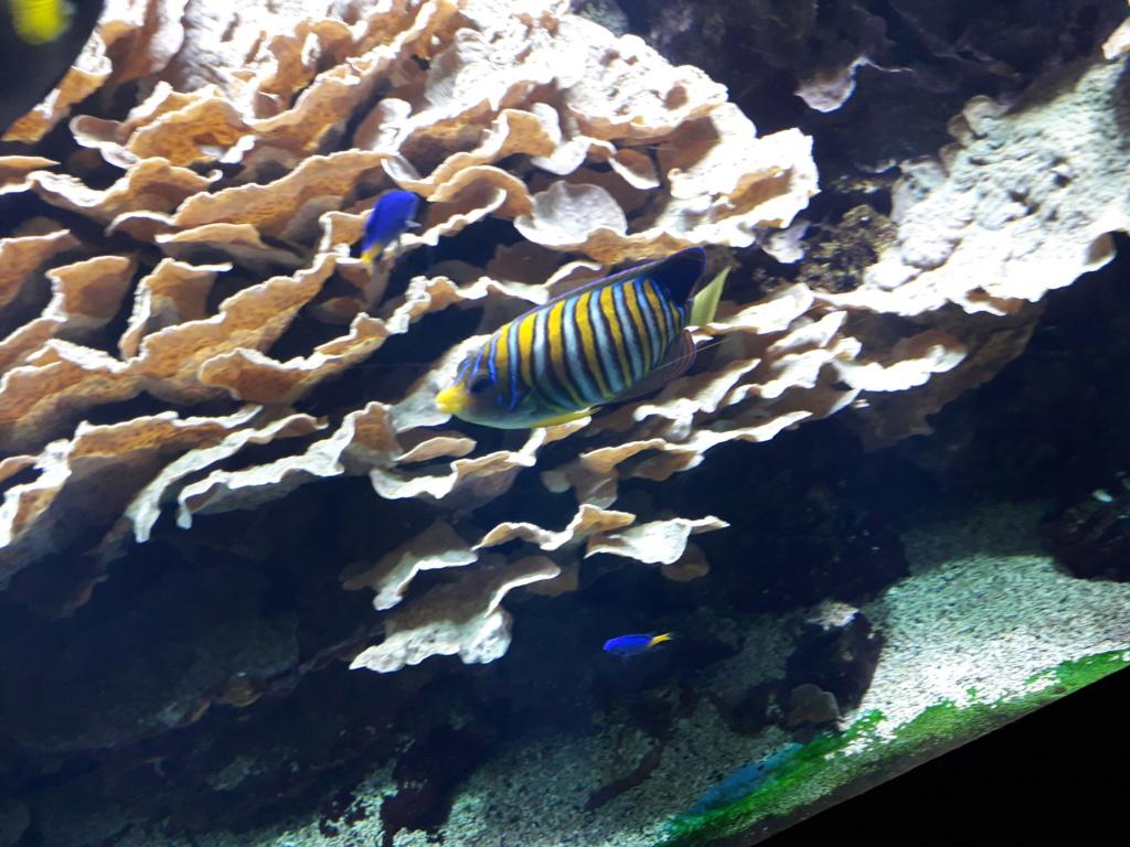 Aquarium de Lyon! 33810