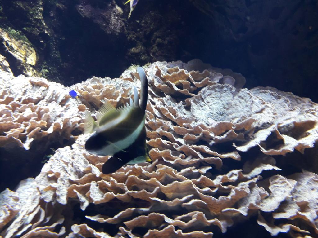Aquarium de Lyon! 34210