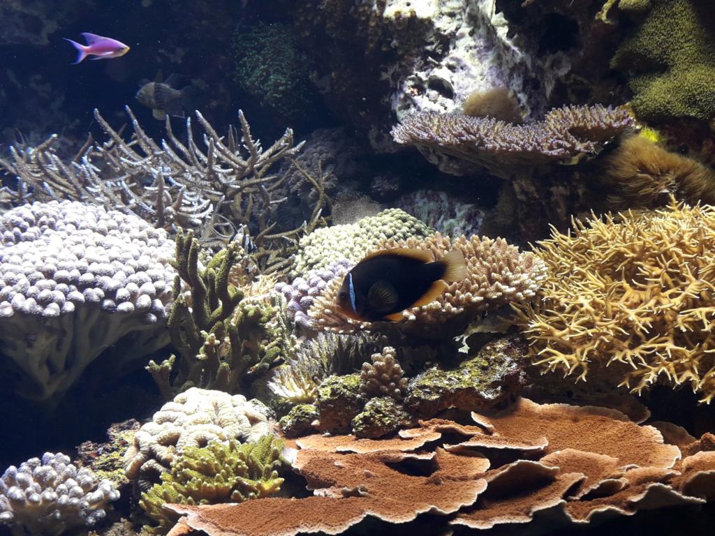 Aquarium de Lyon! 35710
