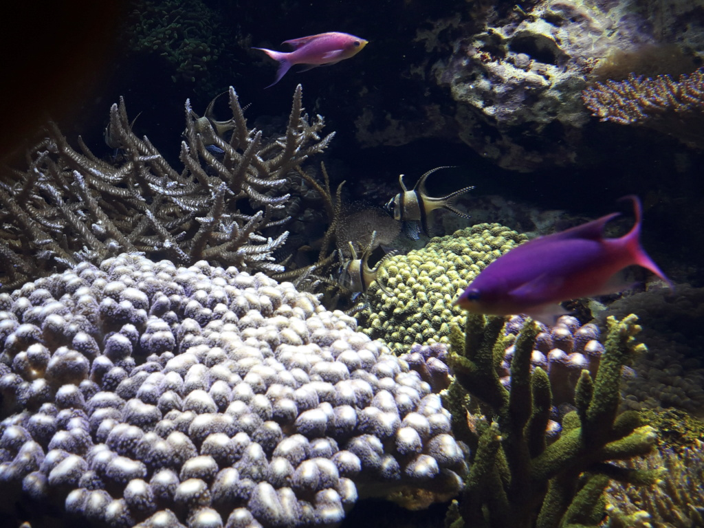 Aquarium de Lyon! 36210