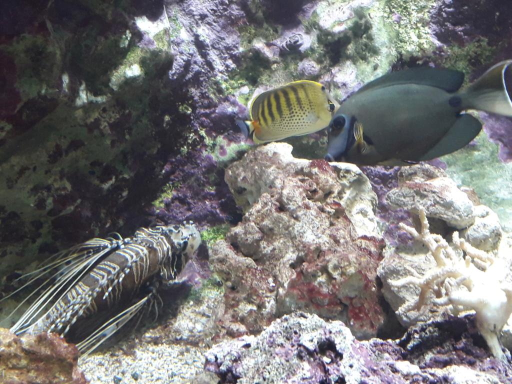 Aquarium de Lyon! 39010