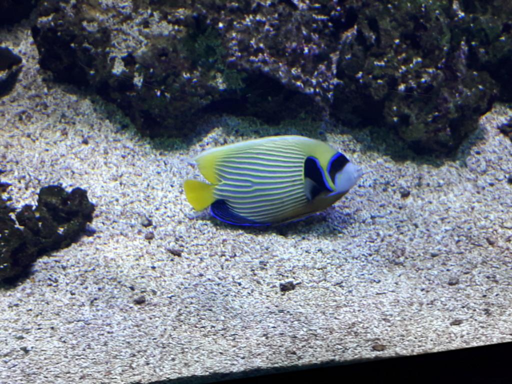 Aquarium de Lyon! 39210