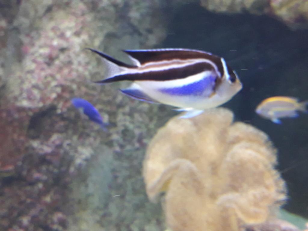 Aquarium de Lyon! 40110