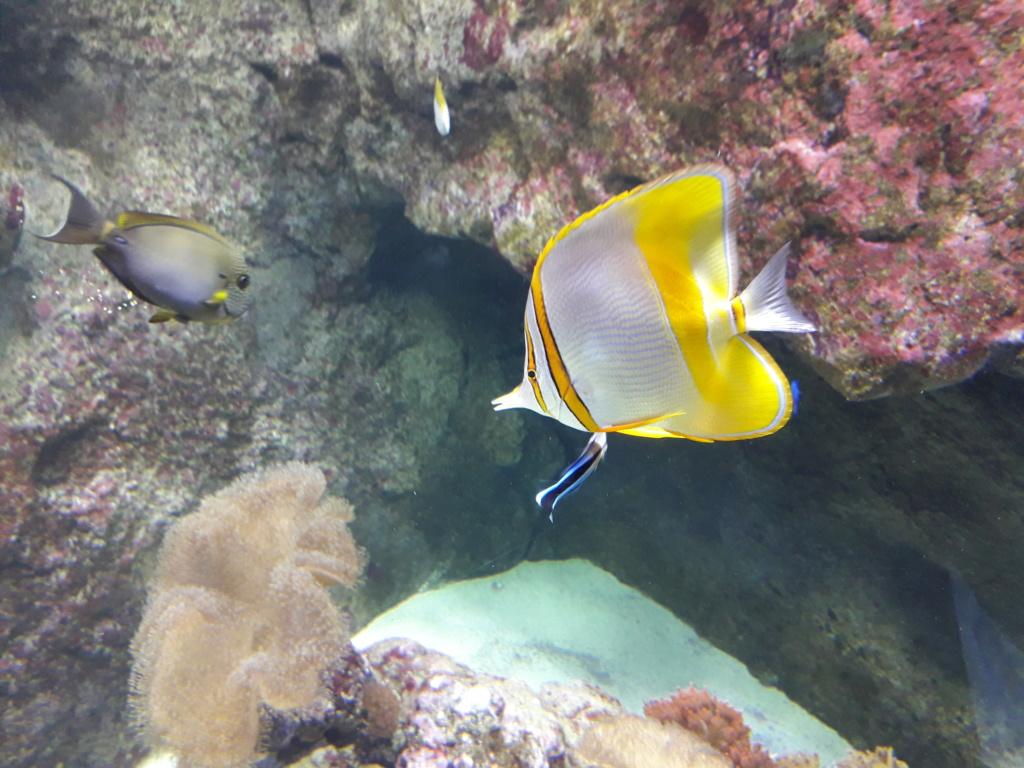 Aquarium de Lyon! 40910