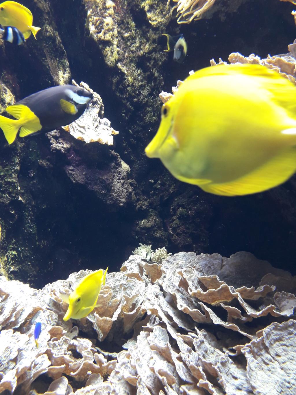 Aquarium de Lyon! 42810