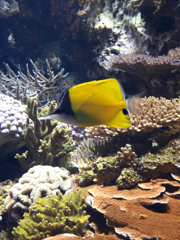 Aquarium de Lyon! 44310
