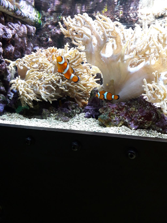 Aquarium de Lyon! 45910