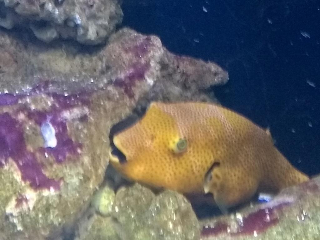 Visite de l'aquarium d'Amnéville du Dimanche 16 Avril 2017 Img_2016