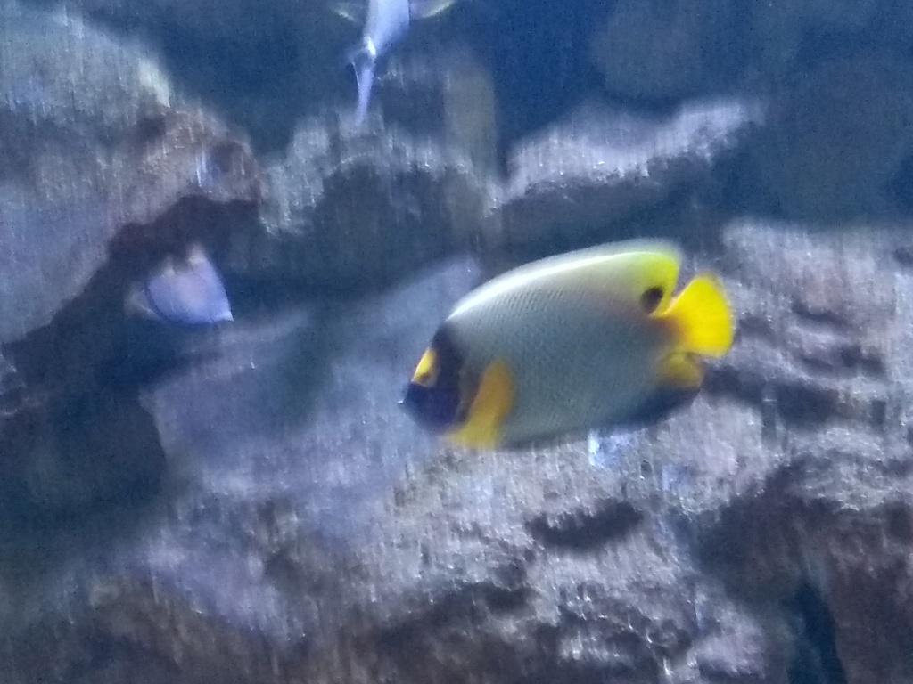 Visite de l'aquarium d'Amnéville du Dimanche 16 Avril 2017 Img_2017
