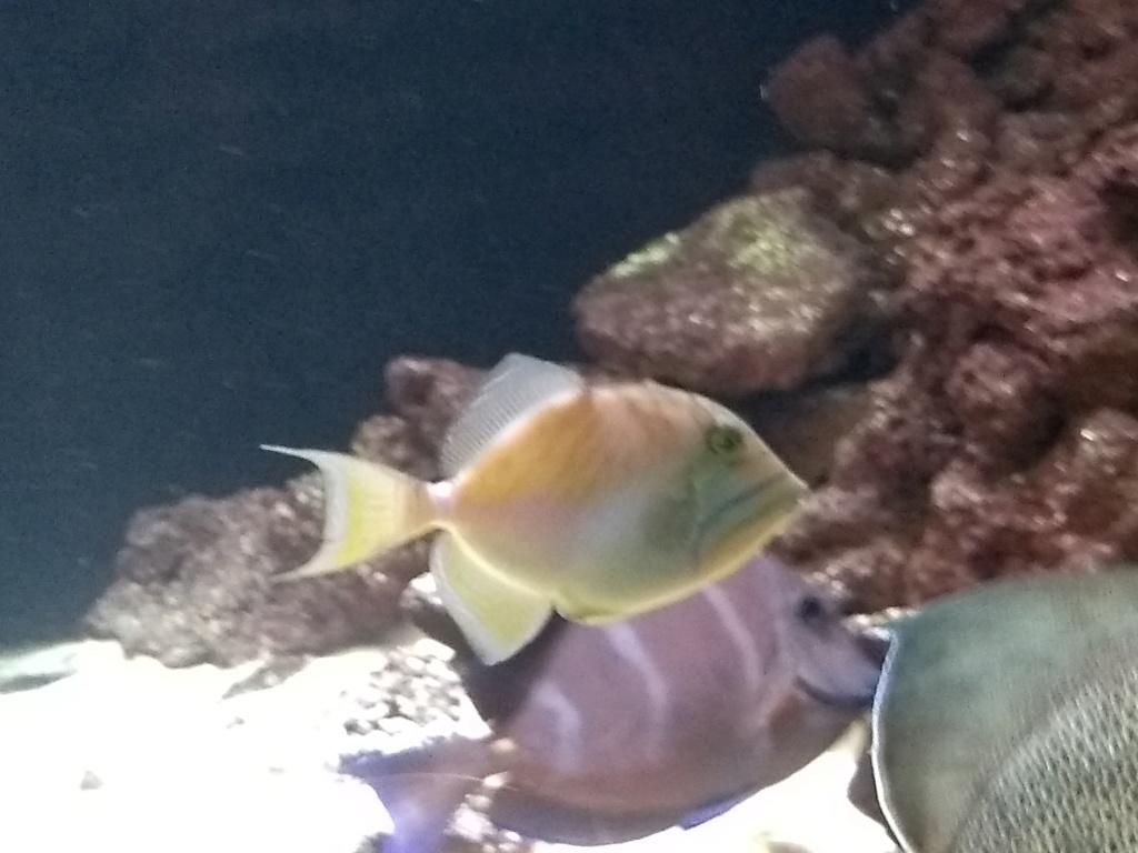 Visite de l'aquarium d'Amnéville du Dimanche 16 Avril 2017 Img_2019