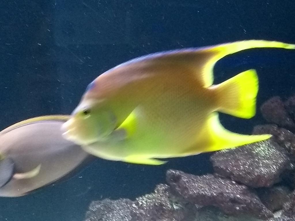 Visite de l'aquarium d'Amnéville du Dimanche 16 Avril 2017 Img_2020