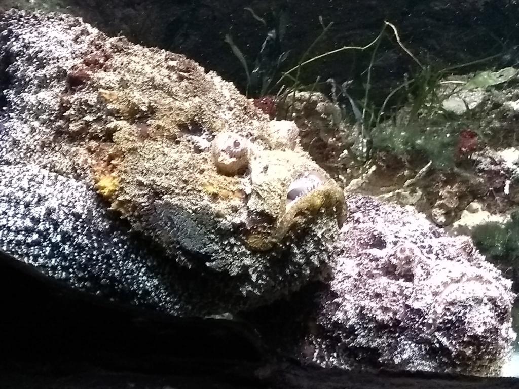 Visite de l'aquarium d'Amnéville du Dimanche 16 Avril 2017 Img_2021
